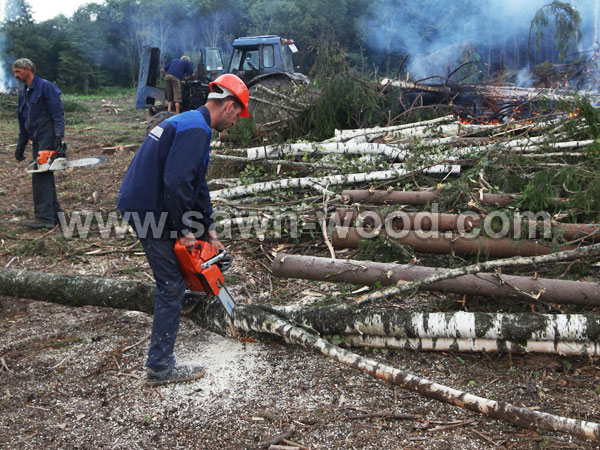sawn wood (41)