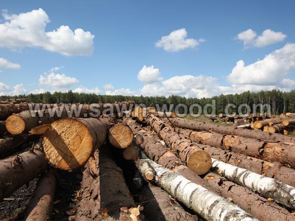 sawn wood (48)